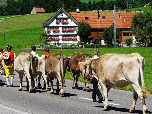 Almauftrieb Appenzellerland